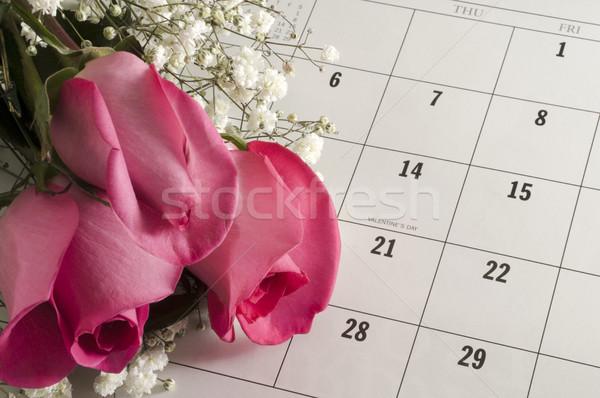 バラ バレンタインデー ピンク オープン カレンダー 写真 ストックフォト © Gordo25