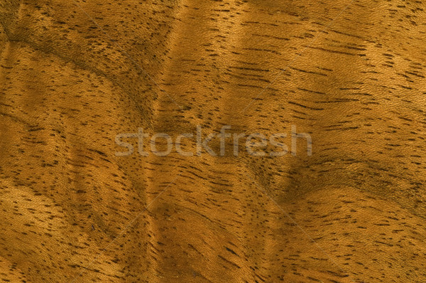 Macro bois image antique grain de bois Photo stock © Gordo25
