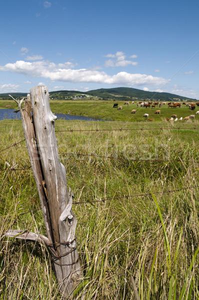 Foto stock: Paisagem · cerca · postar · primeiro · plano · água