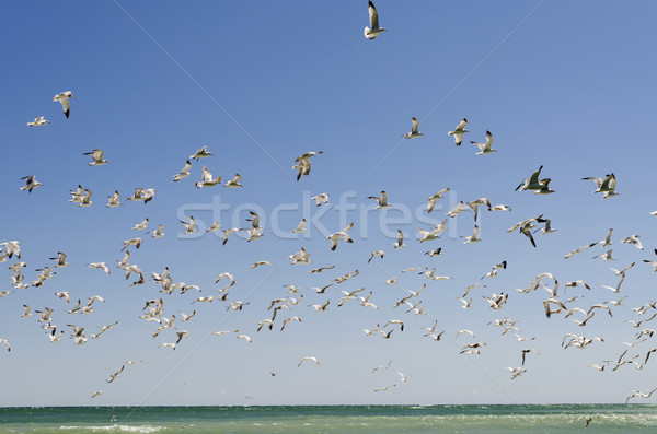 Stock photo: Sky Full of Seagulls
