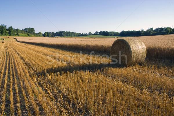 Grão colheita cortar pronto paisagem Foto stock © Gordo25