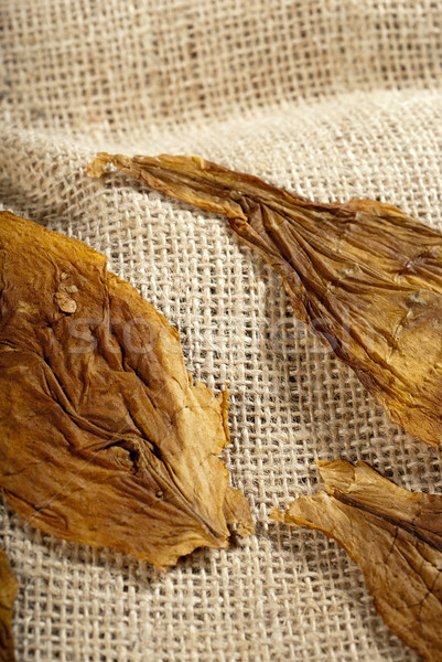 Macro tabaco hoja textura tiro bolsa Foto stock © gorgev