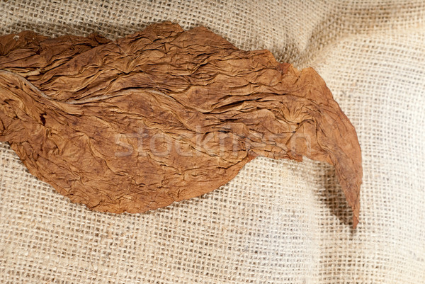 Tobacco closeup Stock photo © gorgev