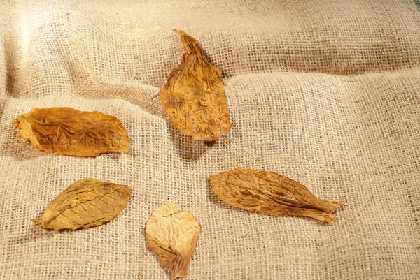 Hojas bolsa tabaco secado colección hoja Foto stock © gorgev