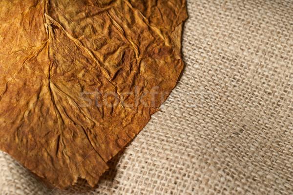 Tabaco macro hoja primer plano delgado enfoque Foto stock © gorgev