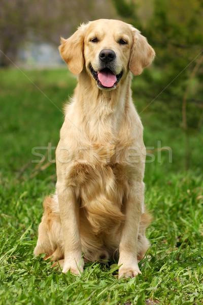happy dog Stock photo © goroshnikova