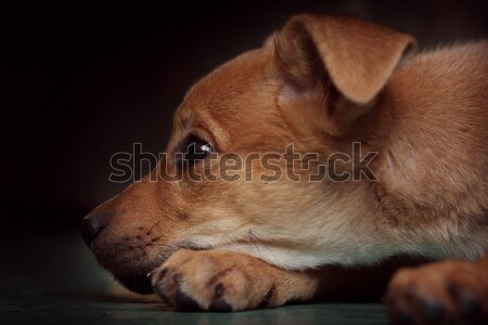 sad red puppy pooch at the shelter Stock photo © goroshnikova