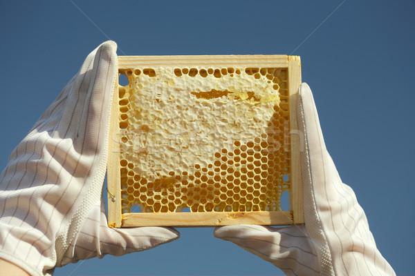 Miele a nido d'ape naturale alimentare medicina piatto Foto d'archivio © Goruppa