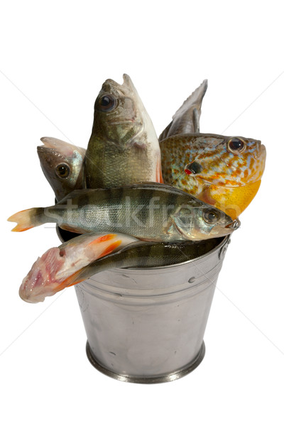 Successful fishing! Stock photo © Goruppa