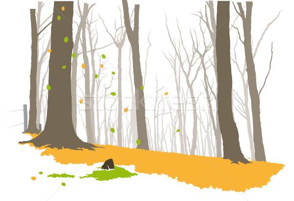 лес осень дерево природы пейзаж зеленый Сток-фото © Grafistart