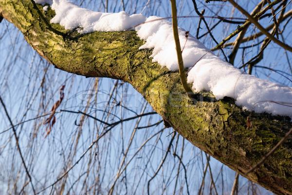 Snow on branches  Stock photo © Grafistart