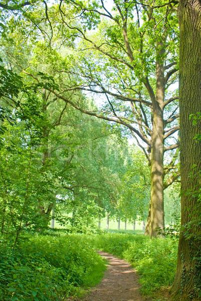 Alten Baum schönen grünen Landschaft Wald Stock foto © Grafistart
