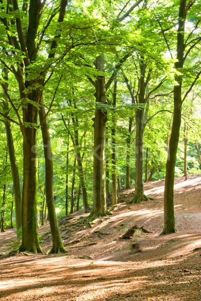 лет лес дерево свет лист золото Сток-фото © Grafistart