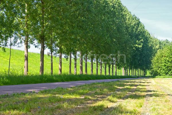 Zeile Bäume Straße grünen Landschaft Frühling Stock foto © Grafistart