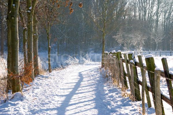 забор зима пейзаж небе снега белый Сток-фото © Grafistart