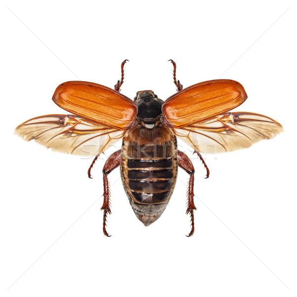 Flying насекомое изолированный белый природы Сток-фото © grafvision