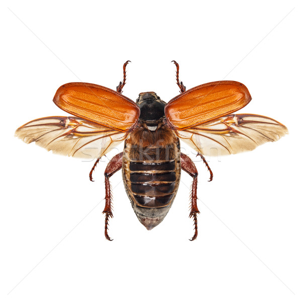 Vliegen insect geïsoleerd witte natuur Stockfoto © grafvision