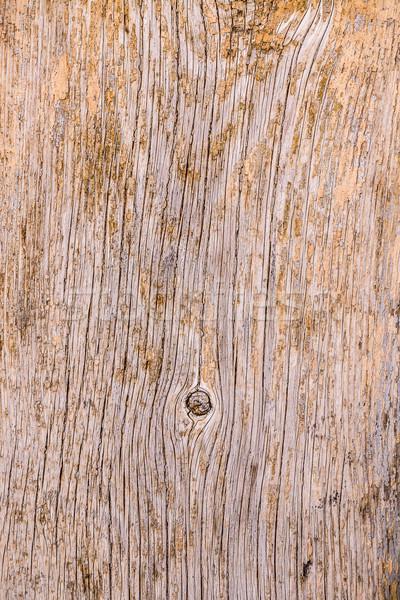 Fa ugatás textúra közelkép lövés erdő Stock fotó © grafvision