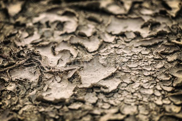 Grond droogte bodem textuur drogen modder Stockfoto © grafvision