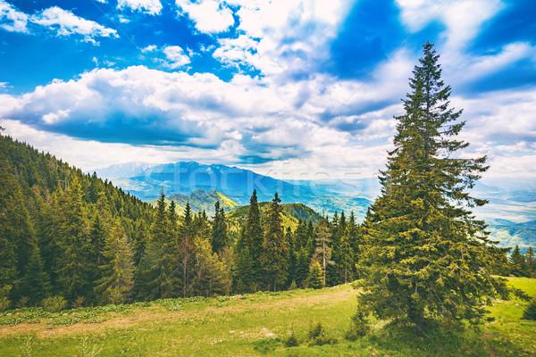 Pittoresque vue montagnes vieux pin forêt Photo stock © grafvision