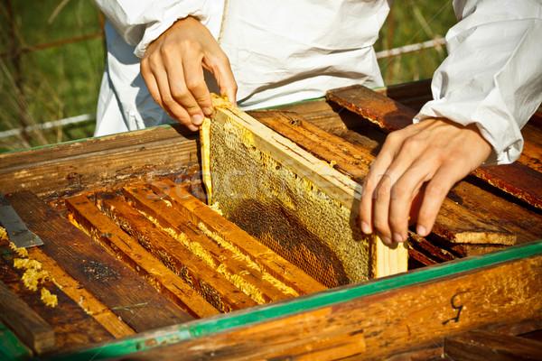 Stockfoto: Werknemer · bijen · honingraat · outdoor · shot · werken