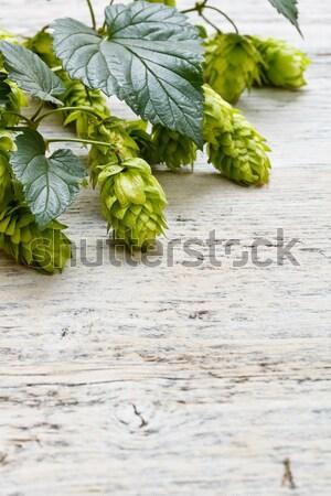 Green plant hops Stock photo © grafvision