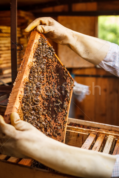Plaster miodu pszczół miodu tekstury charakter pracy Zdjęcia stock © grafvision