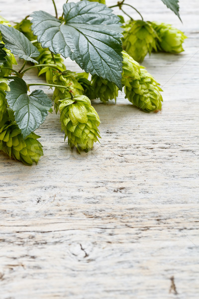 Green fresh hop border Stock photo © grafvision