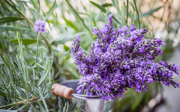 Lavender flowers Stock photo © grafvision