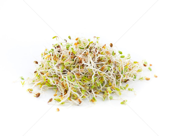 fresh sprouts Stock photo © grafvision