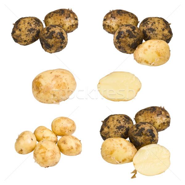 Collection of potato Stock photo © grafvision
