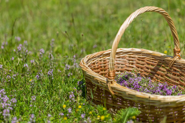 Orégano ervas cesta flor natureza Foto stock © grafvision
