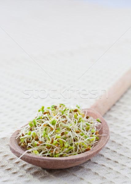 Mustár friss étel főzés kanál mag Stock fotó © grafvision