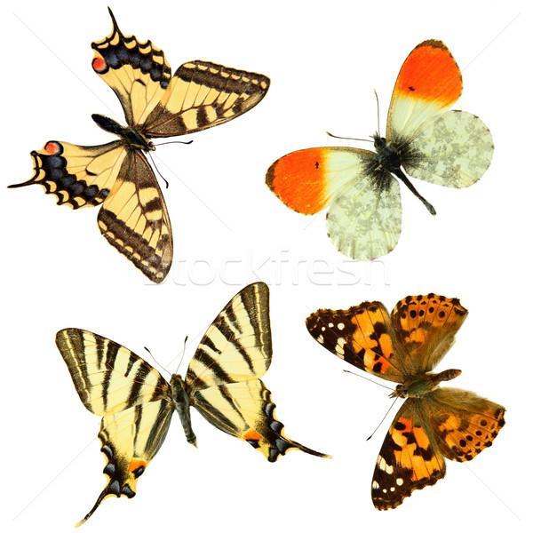 ストックフォト: 蝶 · グループ · 4 · 白 · 背景 · ヨーロッパ