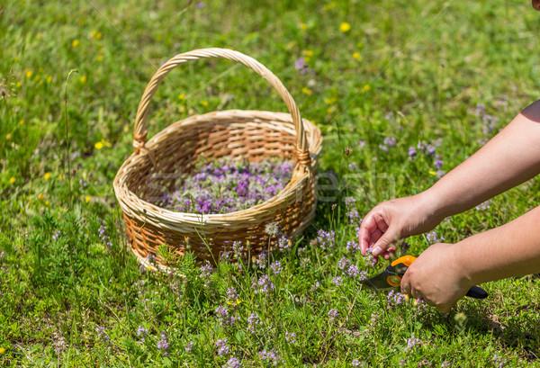 Keklikotu otlar kadın çim Stok fotoğraf © grafvision