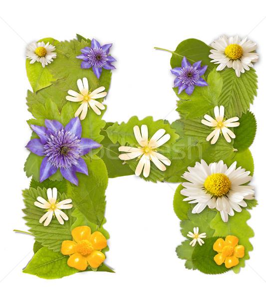 緑色の葉 花 フォント 白 ツリー ストックフォト © grafvision
