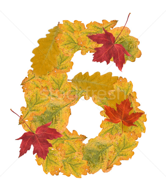 Number of autumn leaves . Number 6 Stock photo © grafvision