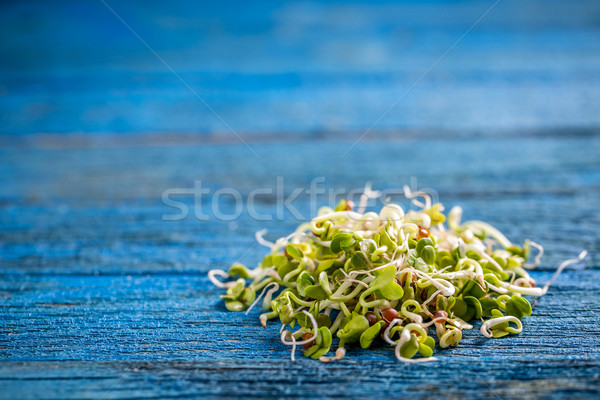 Heap of sprouted radish seeds Stock photo © grafvision