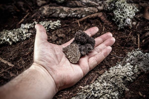 Black truffle Stock photo © grafvision