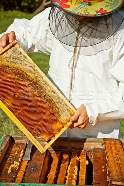 Beekeeper  Stock photo © grafvision