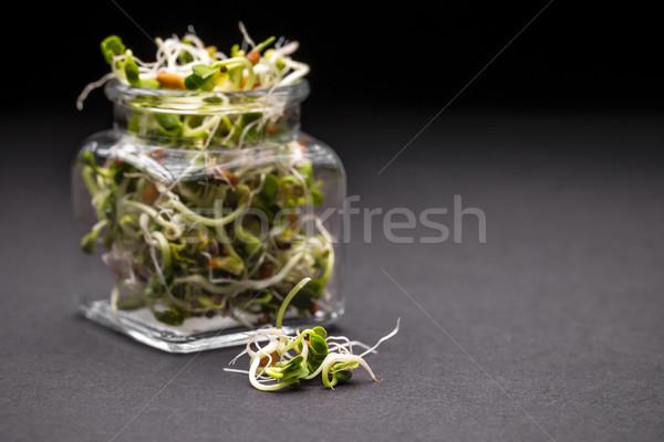 Sprouts  Stock photo © grafvision