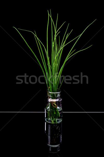 Fresche erba cipollina nero alimentare sfondo Foto d'archivio © grafvision