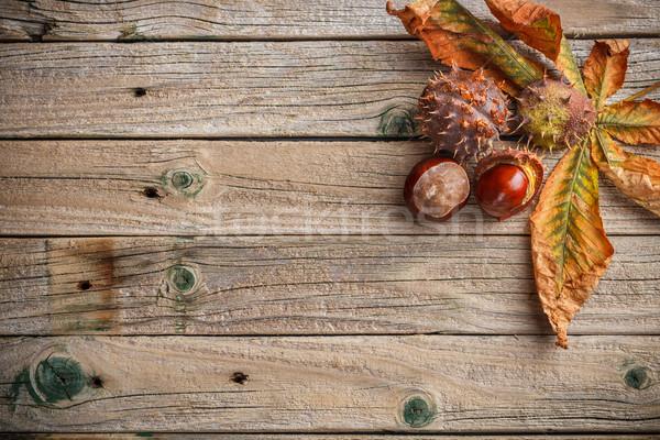 栗 葉 古い 木板 森林 抽象的な ストックフォト © grafvision