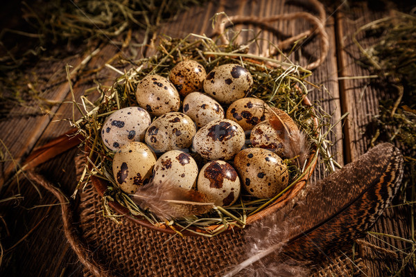 Quail eggs Stock photo © grafvision