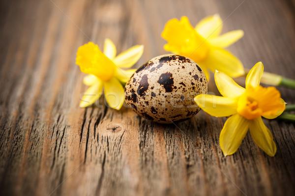 Quail egg  Stock photo © grafvision