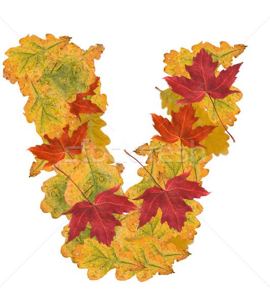 紅葉 手紙 アルファベット ツリー 自然 オレンジ ストックフォト © grafvision