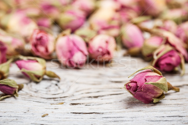 Tea rose buds Stock photo © grafvision