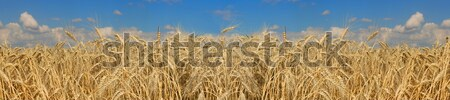 beautifully landscape  Stock photo © grafvision