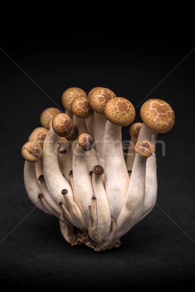 Jadalny grzyb czarny żywności grupy asian Zdjęcia stock © grafvision