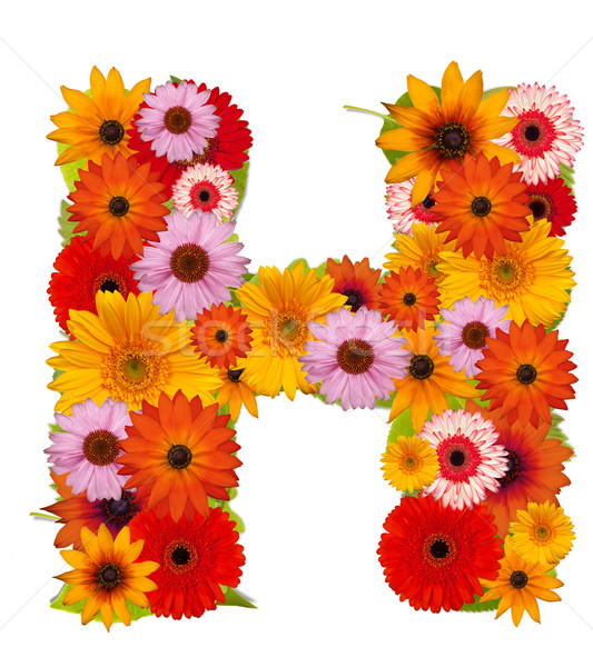 花 手紙 アルファベット 孤立した 白 ストックフォト © grafvision